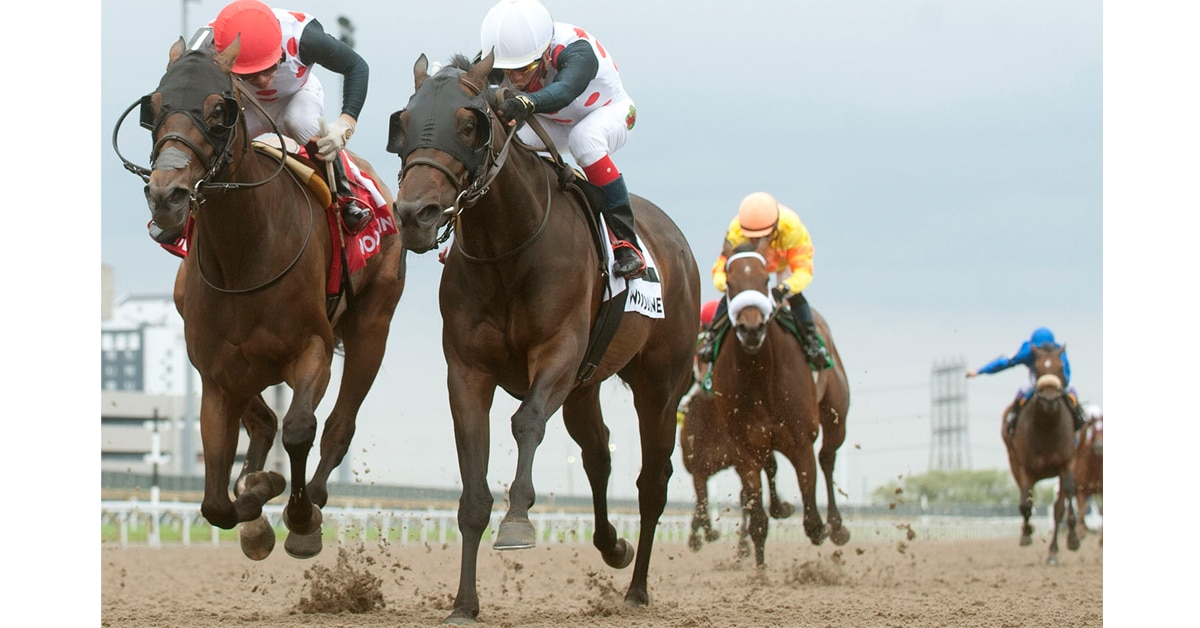 Thumbnail for Souper Escape Runs Lights Out in Trillium Stakes at Woodbine