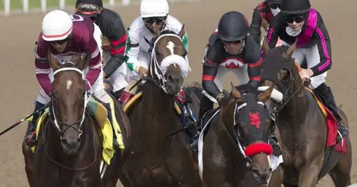 Thumbnail for Back on Track: Large Fields for Opening Day of Woodbine 2021