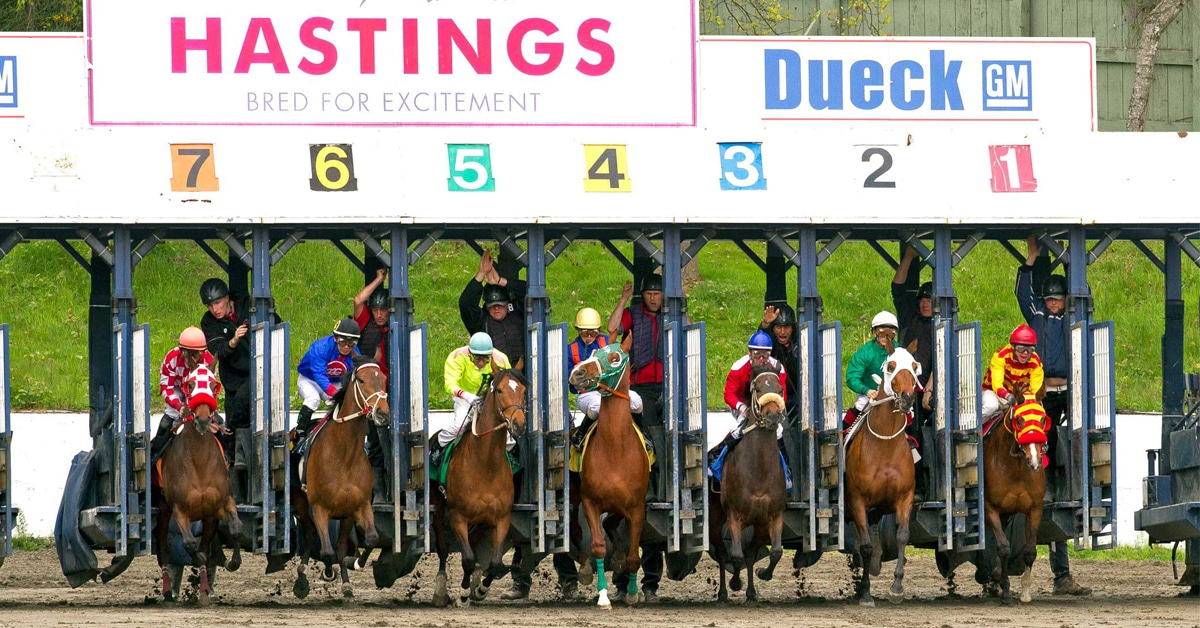 Thumbnail for Hastings Racecourse Cancels Tuesday's Race Card