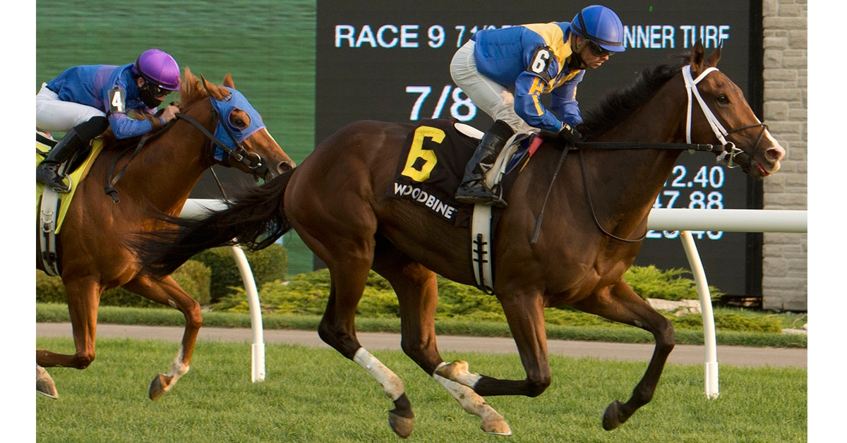 Thumbnail for Queen's Plate Hopeful Avoman Something to Shout About